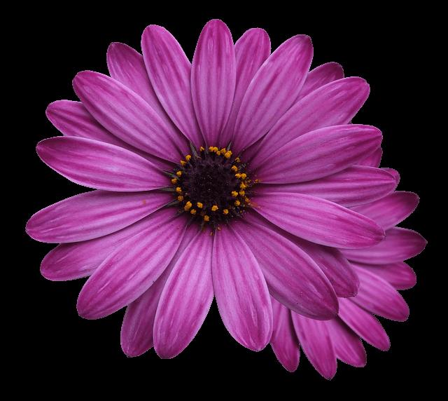 flower marigolds 3192686_640 1